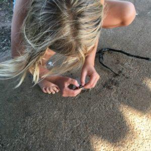 Zebra mussel exploration
